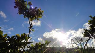 風景・植物 456