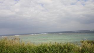 草刈り1101 010
