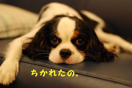Us_DSC_0093.jpg