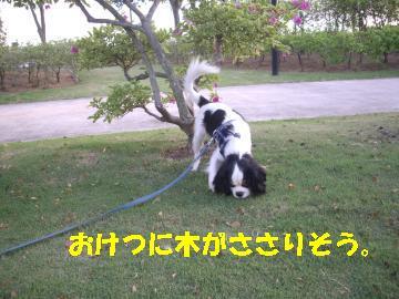 Us_IMGP2100.jpg