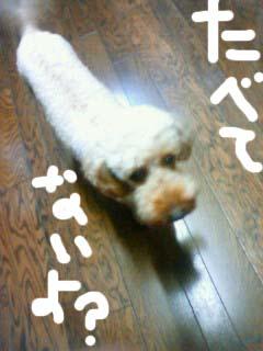 dorobouneko131.jpg