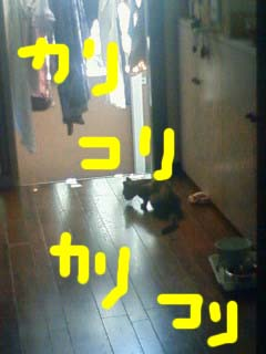 dorobouneko81.jpg