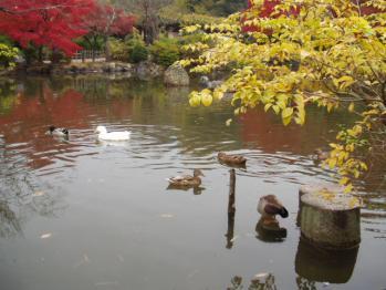 20101123 K4京都散策 (6)