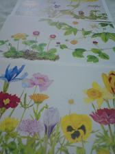 お花のポストカード3枚