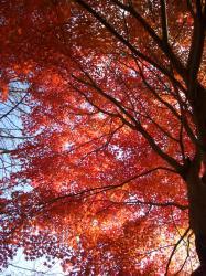 お寺の紅葉その1