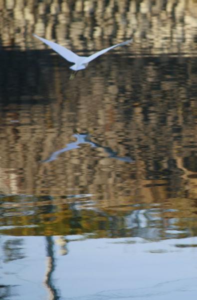 飛び立つ白い鳥