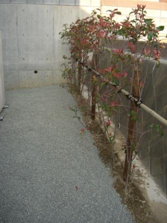 外構工事 レッドロビンの垣根