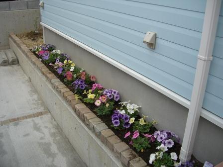 外構工事? 花壇にお花を植えました