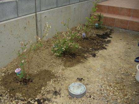 外構工事? 庭にはブルーベリーを植えました