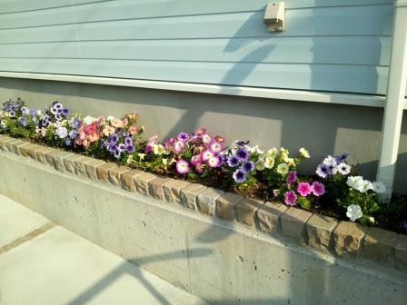 花壇も満開になりました