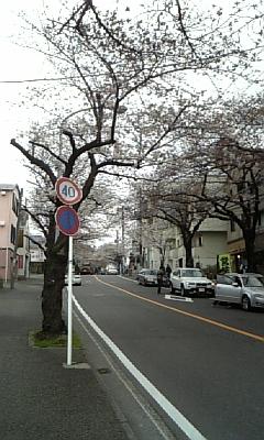 桜台の桜並木