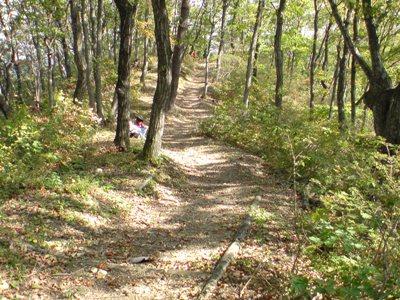 創造の森2009_10