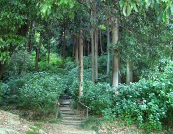 大和郡山矢田寺 067