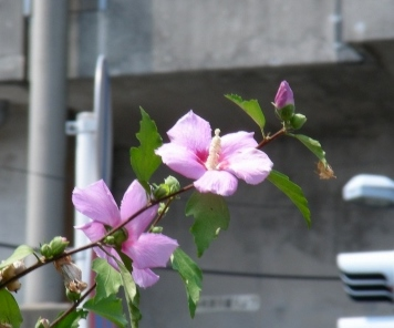 岡山倉敷 416