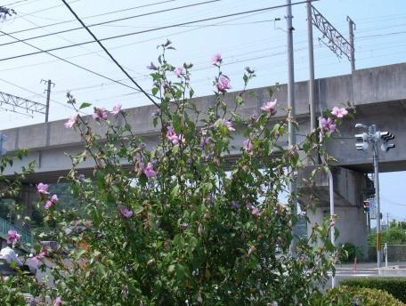 岡山倉敷 415