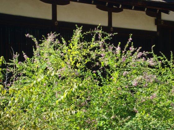 鴨川下鴨神社 099