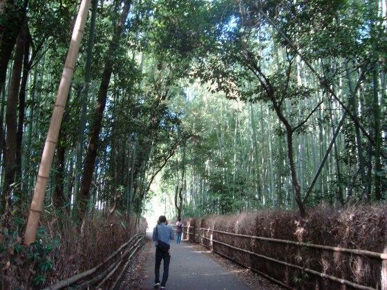 嵐山ふよう 030