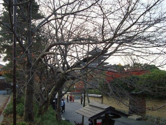 清水清閑寺紅葉2010 036