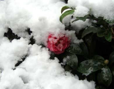 雪四条大晦日2010 033
