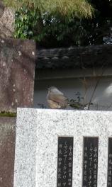 智積院渉成園梅2011-2 035