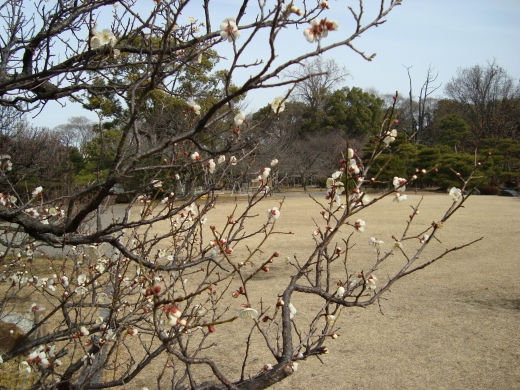 智積院渉成園梅2011 131