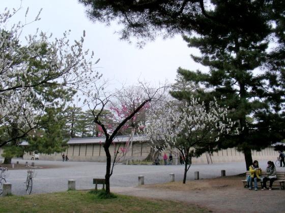 御所桃桜2011 076