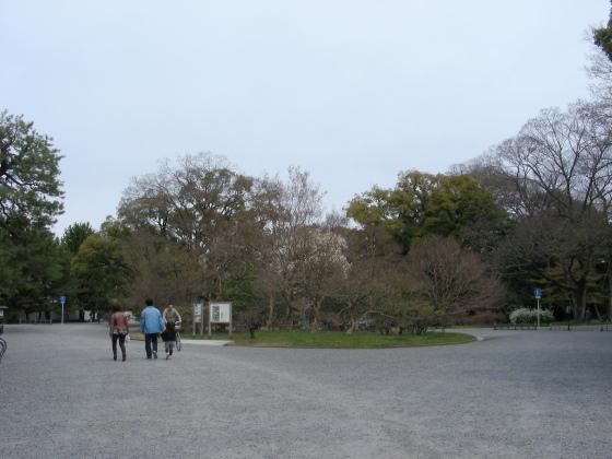御所桃桜2011 013