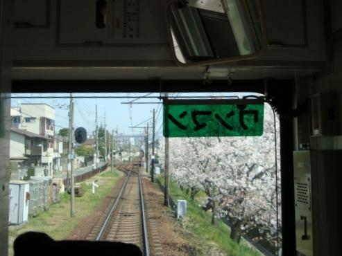 2011桜京福、円山 019