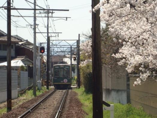 2011桜京福、円山 004