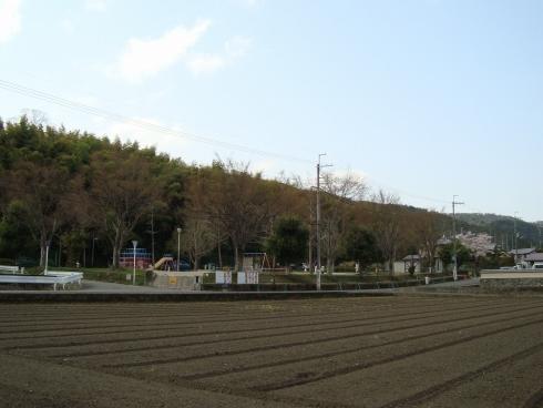 西賀茂桜2011 024