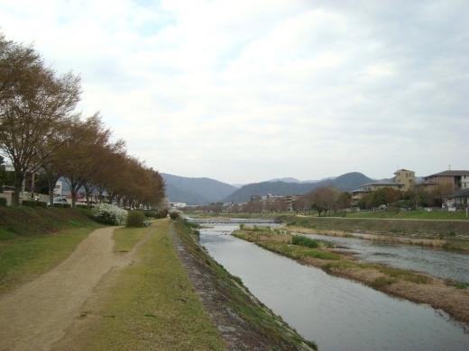 西賀茂桜2011 082