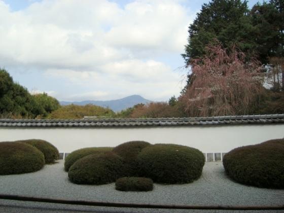 西賀茂桜2011 045