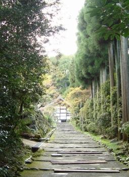 西賀茂桜2011 041