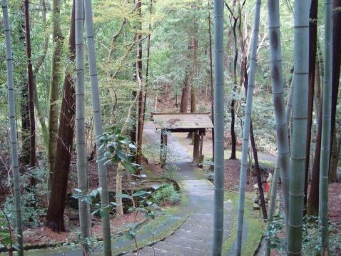 西賀茂桜2011 052