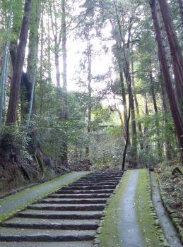 西賀茂桜2011 039