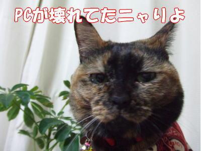 08_2_15_3.jpg