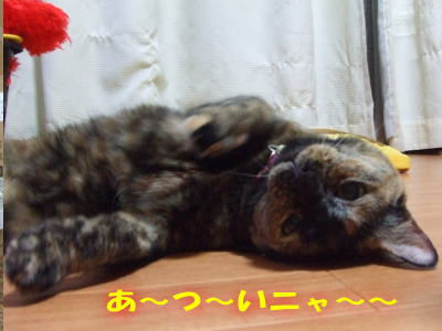 10_07_26_5.jpg