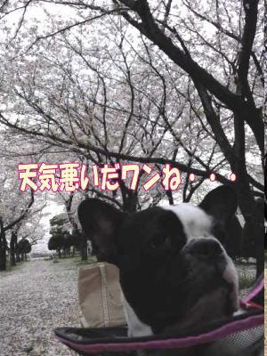 11_4_16_2.jpg
