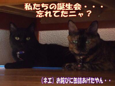 2010_08_12_2.jpg