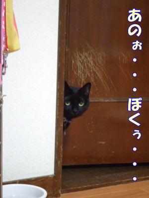 2010_08_15_1.jpg