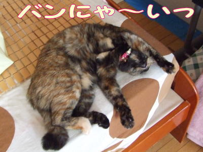 2010_08_28_2.jpg