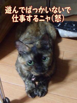 2010_08_31_3.jpg