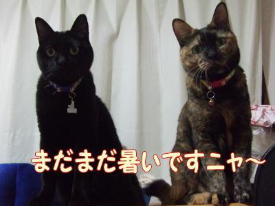 2010_09_6_4.jpg