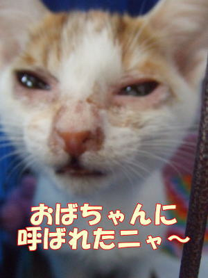 2010_10_16_3.jpg