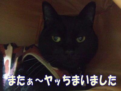2010_10_28_1.jpg