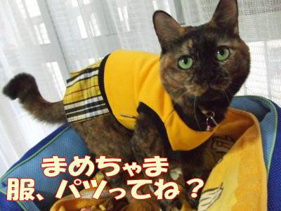 2010_10_28_3.jpg