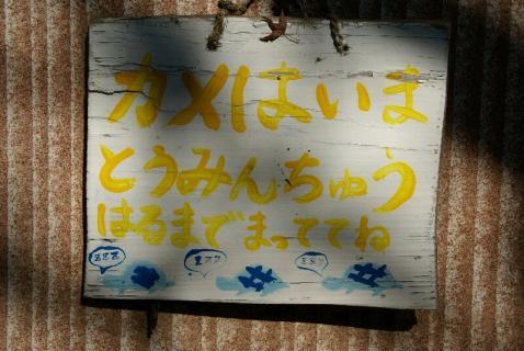 DSC05616亀3