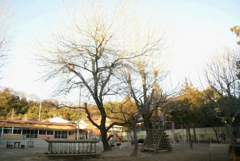 DSC06047樹木