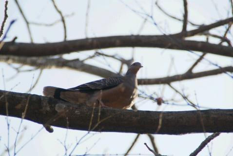 DSC01454鳥