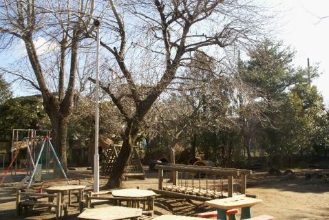 DSC01516冬の園庭